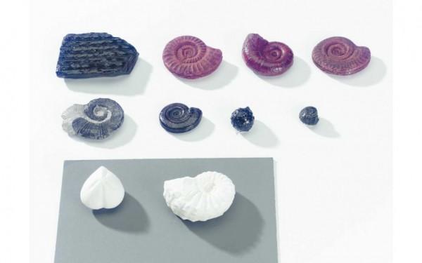 Ammonitensatz Evolution